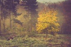 De herfstlandschap in ochtendpark Mening van kleurrijke bomen in mist Stock Afbeelding