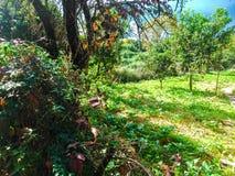 De herfstlandschap op een gebied van Korfu Stock Afbeeldingen