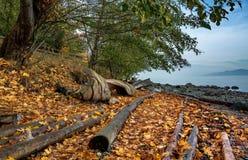 De herfstlandschap op een wild strand Stock Foto