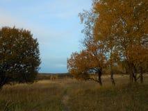 De herfstlandschap op het gebied met weg en zelfde bomen royalty-vrije stock foto