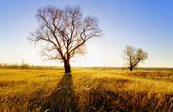 De herfstlandschap - oude die wilgen op een gebied op de rivierbank door de het plaatsen zon wordt aangestoken royalty-vrije stock afbeeldingen