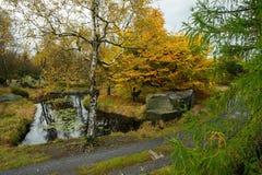 De herfstlandschap - prachtig gekleurd allen stock afbeelding