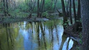 De herfstlandschap, somber nevelig bosmeer, bezinning stock footage