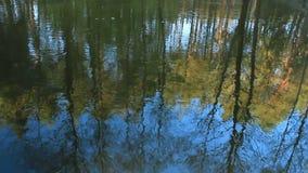 De herfstlandschap, somber nevelig bosmeer, bezinning stock videobeelden