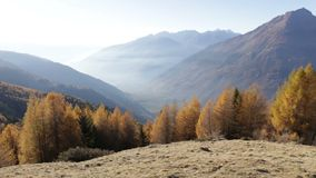 De herfstlandschap in Valtellina in Italië stock video