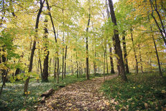 De herfstlandschap van bos royalty-vrije stock fotografie