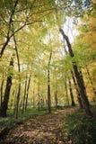 De herfstlandschap van bos royalty-vrije stock afbeelding