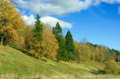 De herfstlandschap van het Russische bos Stock Foto