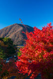 De herfstlandschap van Japan Stock Afbeeldingen