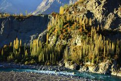 De herfstlandschap van kleurrijk haarlok, rotsberg en blauwe hemel royalty-vrije stock fotografie