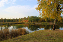 De herfstlandschap: vijver in het park Stock Afbeelding