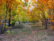 De herfstlandschap - weg in een gemengd bos Stock Afbeelding