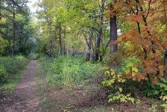 De herfstlandschap - weg in een gemengd bos Stock Afbeeldingen
