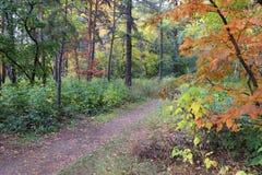 De herfstlandschap - weg in een gemengd bos Stock Foto