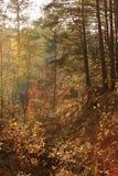 De herfstlandschap: Zonlicht in het bos Royalty-vrije Stock Fotografie