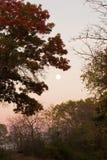 De herfstmaan stock foto