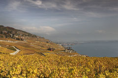 De herfstmening over meer Genève van de Lavaux-wijnstokken stock afbeeldingen
