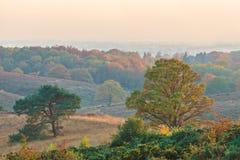 De herfstmening van het nationale park Veluwe in Nederland Stock Foto