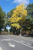 De herfstmiddag in Central Park Royalty-vrije Stock Afbeeldingen