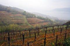 De herfstmist in Alpiene wijngaard Royalty-vrije Stock Foto's