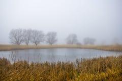 De herfstochtend bij een bosmeer met mist en mooie warme kleuren Stock Foto's