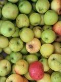 de herfstoogst, groene appelen, appelvruchten, appel royalty-vrije stock foto