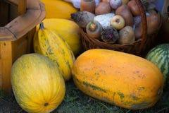 De herfstoogst: pompoen, watermeloen, mand met bieten, carr Royalty-vrije Stock Afbeeldingen