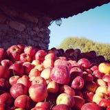 De herfstoogst van appel op Oekraïens landbouwbedrijf stock foto
