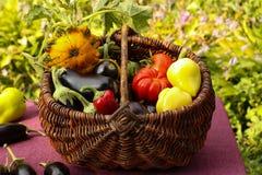 De herfstoogst van groenten in een mand op de tuin stock foto's