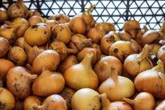 De herfstoogst van vitaminen en nuttig voedsel Stock Foto