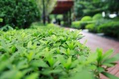 De herfstpark Royalty-vrije Stock Fotografie