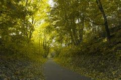 De herfstpark Stock Foto