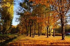 De herfstpark Royalty-vrije Stock Foto