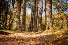 De herfstpark Stock Fotografie