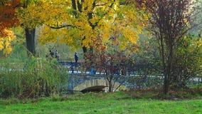 De herfstpark stock video