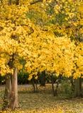De herfstpark stock foto's