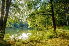 De herfstpark Meer Stock Foto