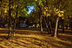 De herfstpark met gevallen bladeren wordt behandeld dat royalty-vrije stock afbeeldingen