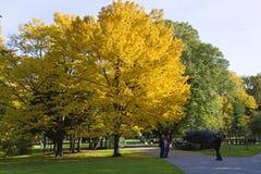 De herfstpark met kleurrijke bomen Stock Afbeelding