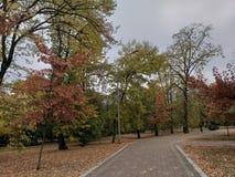 De herfstpark met mooie bomen stock foto's