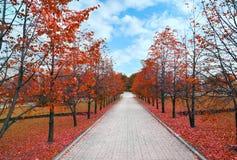 De herfstpark met rode gevallen bladeren Stock Fotografie