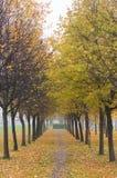 De herfstpark in mist Stock Afbeelding