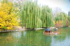 De herfstpark in Myrhorod, de Oekraïne Stock Afbeeldingen