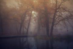 De herfstpark op een mistige dag Stock Foto's