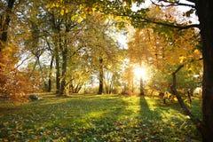 De herfstpark op een zonnige dag stock afbeeldingen