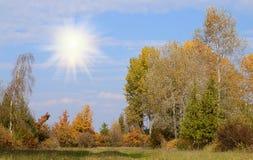 De herfstpark op een zonnige dag Royalty-vrije Stock Foto's