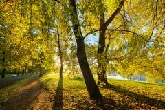 De herfstpark op een zonnige ochtend stock afbeeldingen