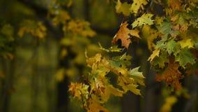 De herfstpark in de regen Melancholische stemming stock video
