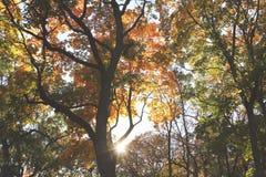 De herfstpark tijdens zonsondergang royalty-vrije stock fotografie