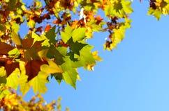 De herfstpark van de daling. Stock Afbeeldingen